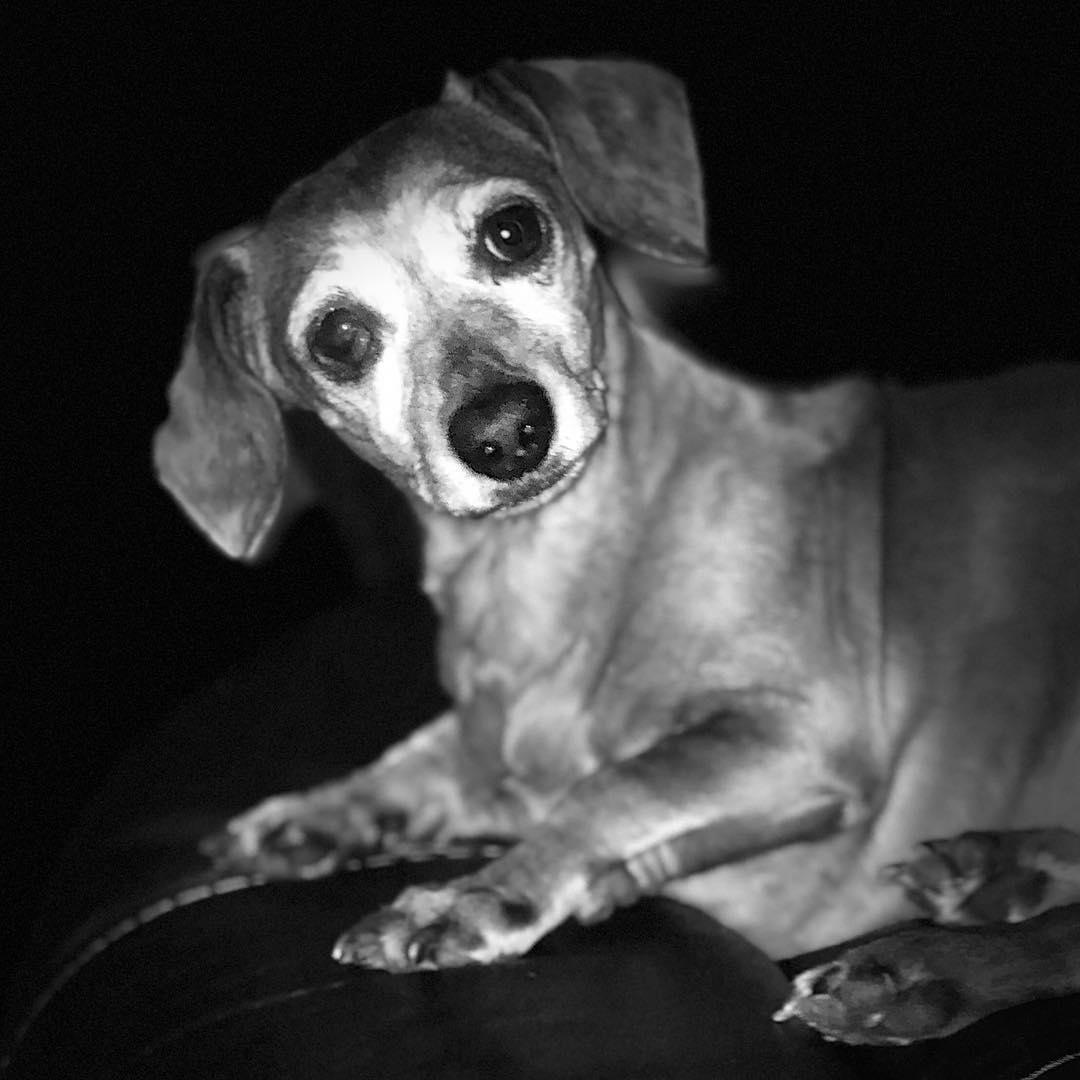 Portrait of a Hound